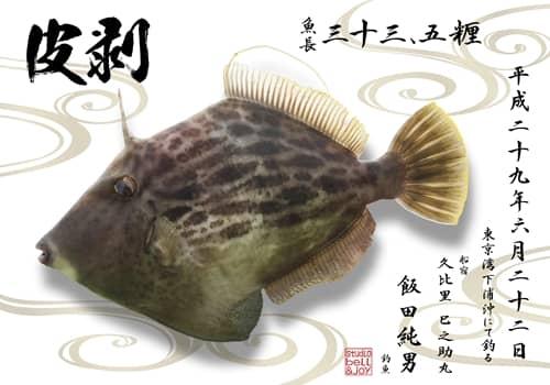 カワハギ デジタル魚拓