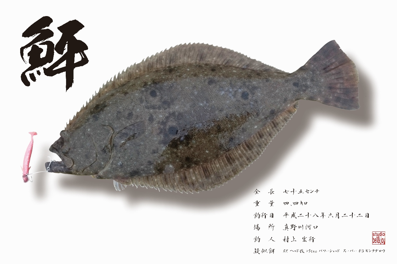 デジタル魚拓ヒラメ