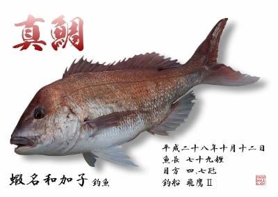 蛯名様 真鯛 デジタル魚拓